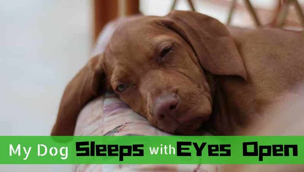 dog-sleeps-with-eyes-open-6