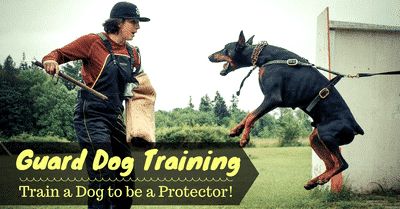 guard-dog-training-2