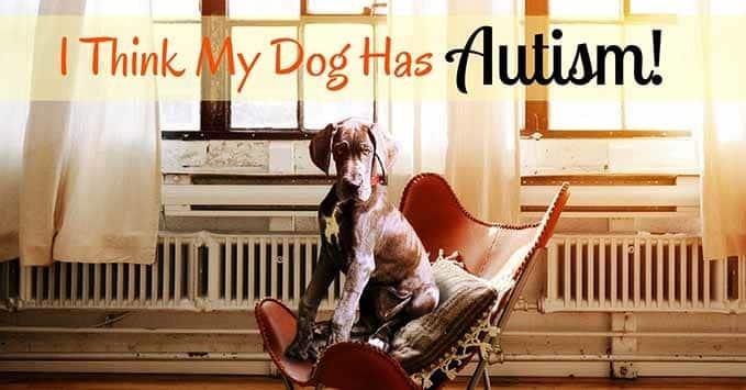 i-think-my-dog-has-autism-11