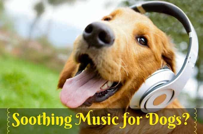 soothing-music-for-dogs-5