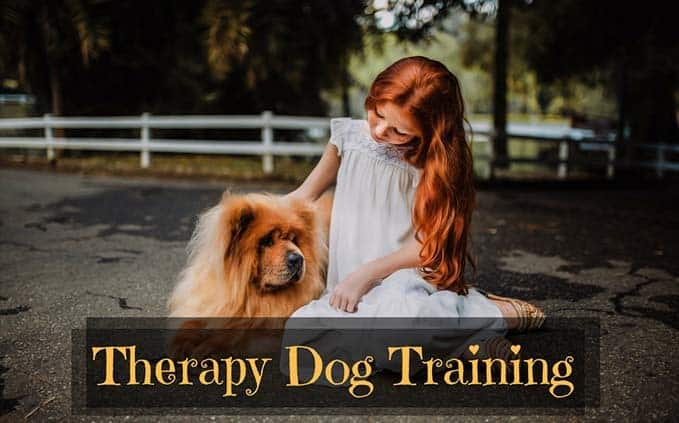 therapy-dog-training-5