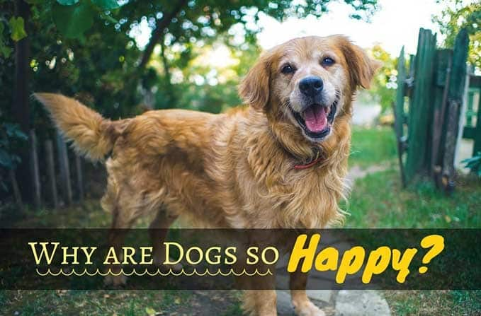 why-are-dogs-so-happy-9