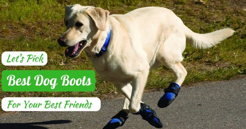 The-Best-Dog-Boots