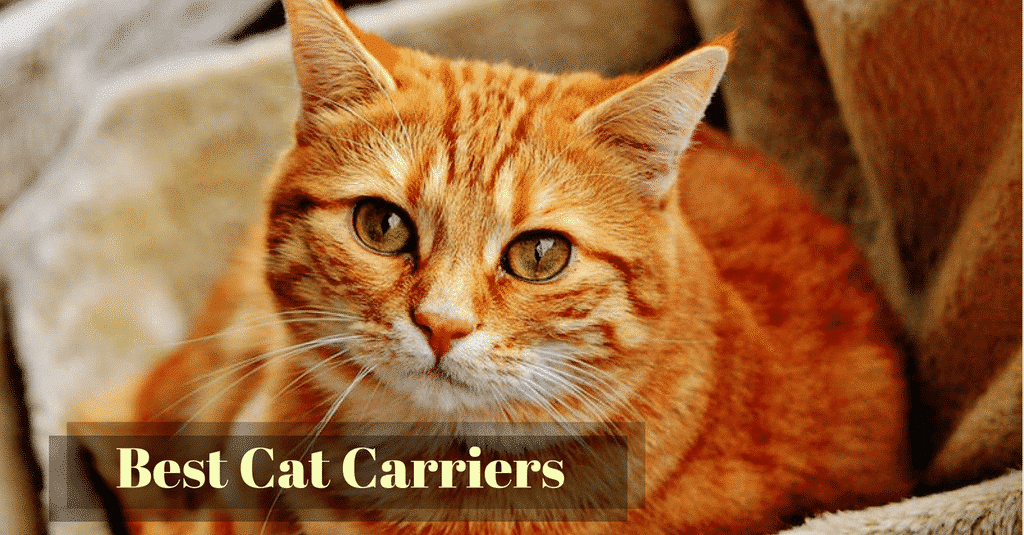 best-cat-carriers-1