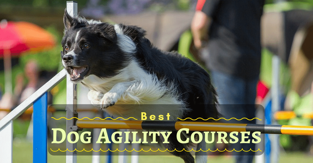 best-dog-agility-courses-1