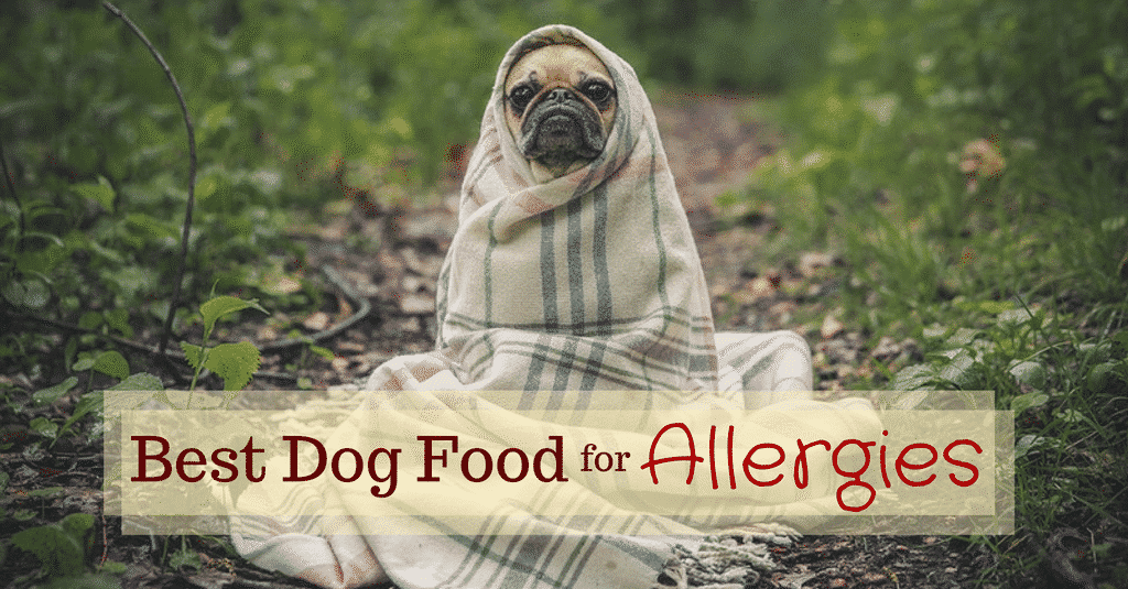 best-dog-food-for-allergies-1