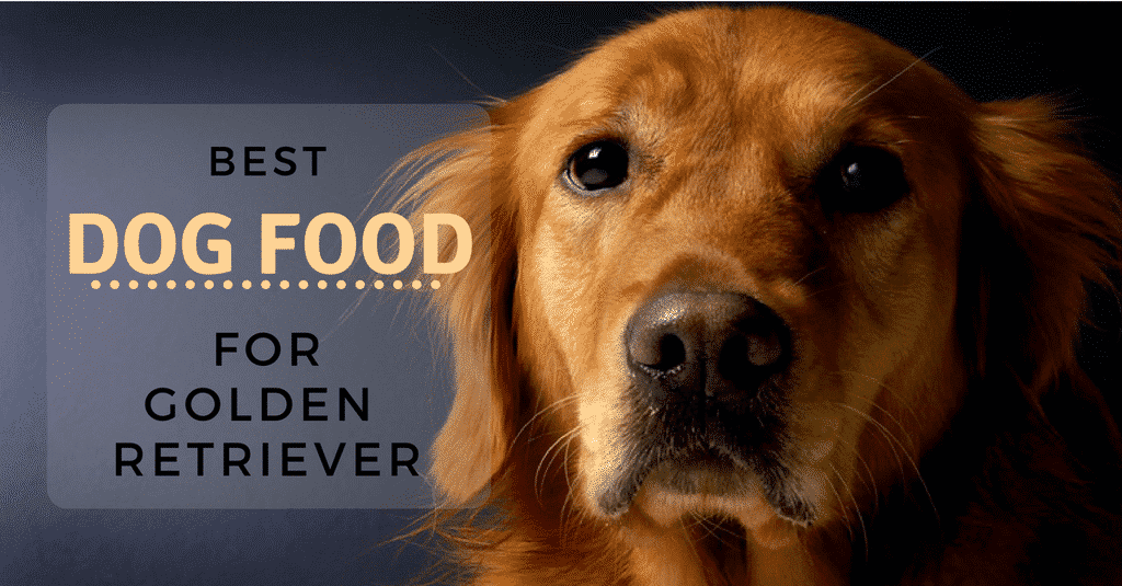 best-dog-food-for-golden-retriever-1