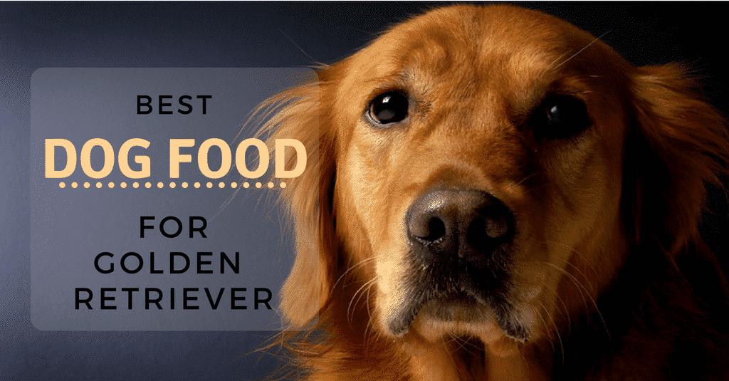 best-dog-food-for-golden-retriever-1