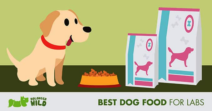 best-dog-food-for-labs-feature-photo