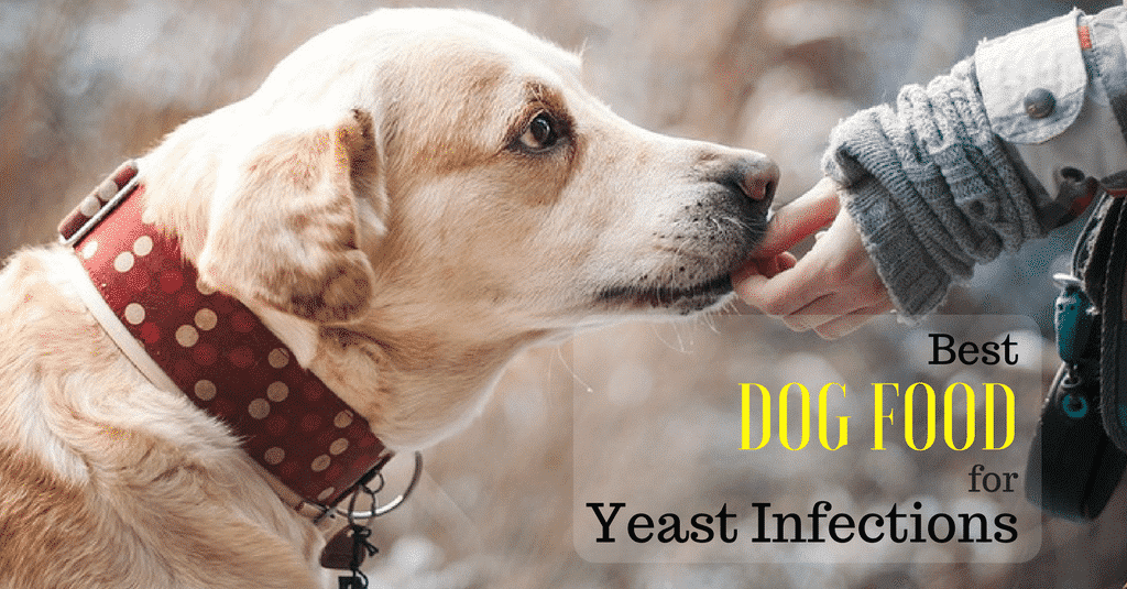 best-dog-food-for-yeast-infection-1