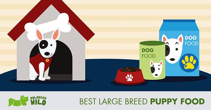 best-large-breed-puppy-food-feature-photo-2