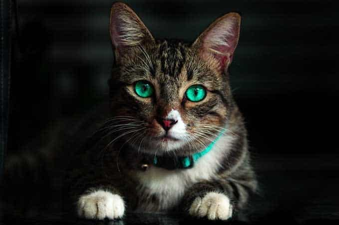 Can-Cats-See-In-The-Dark-5