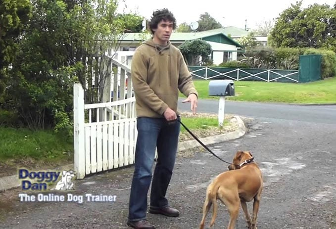 Doggy-Dan-the-online-dog-trainer-review-8