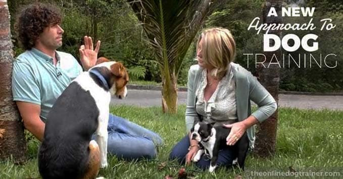 Doggy-Dan-the-online-dog-trainer-review-dog-aggression