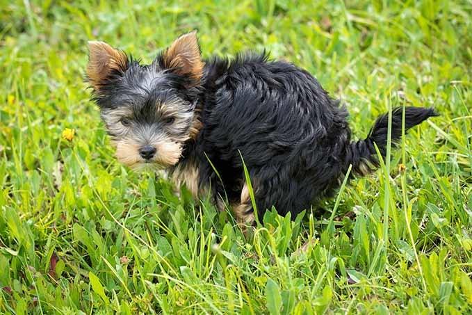 best-pooper-scooper-for-dogs-1