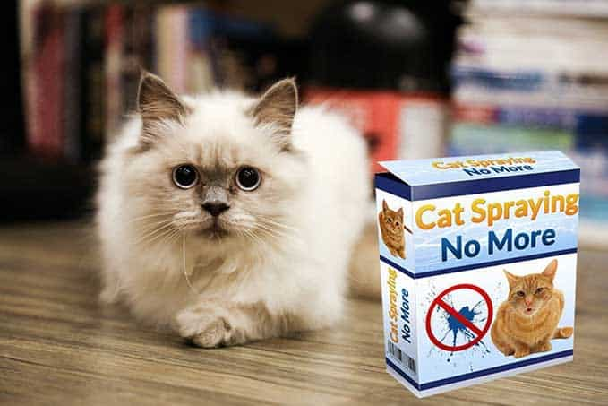 cat-spraying-no-more-review-13