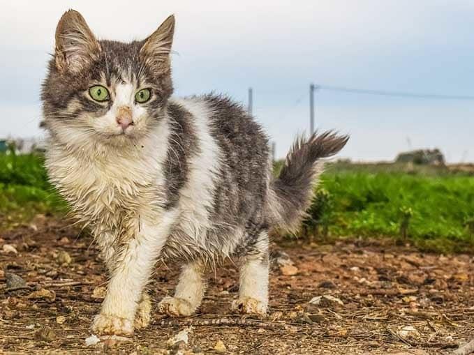 do-cats-need-bath-3