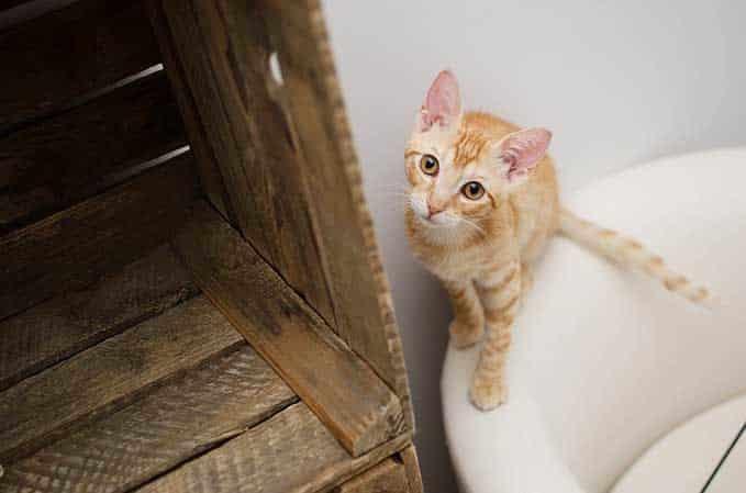 do-cats-need-bath-5
