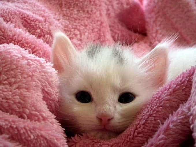 do-cats-need-bath