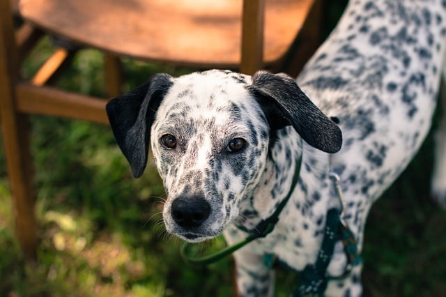 black-spot-on-dogs-1