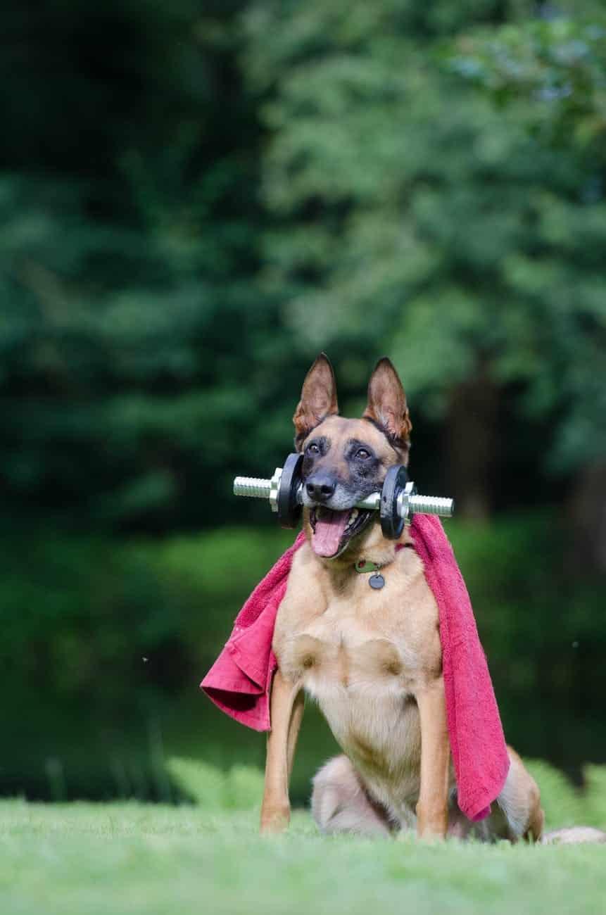 dog-agility-course-1