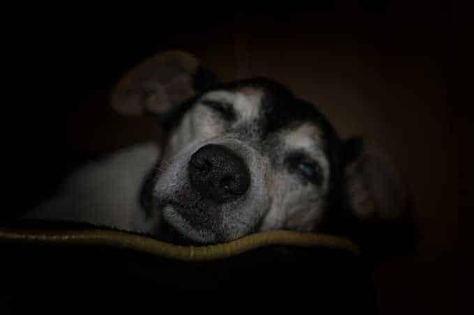 dog-sleeps-with-eyes-open-1