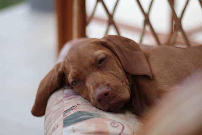 dog-sleeps-with-eyes-open-2