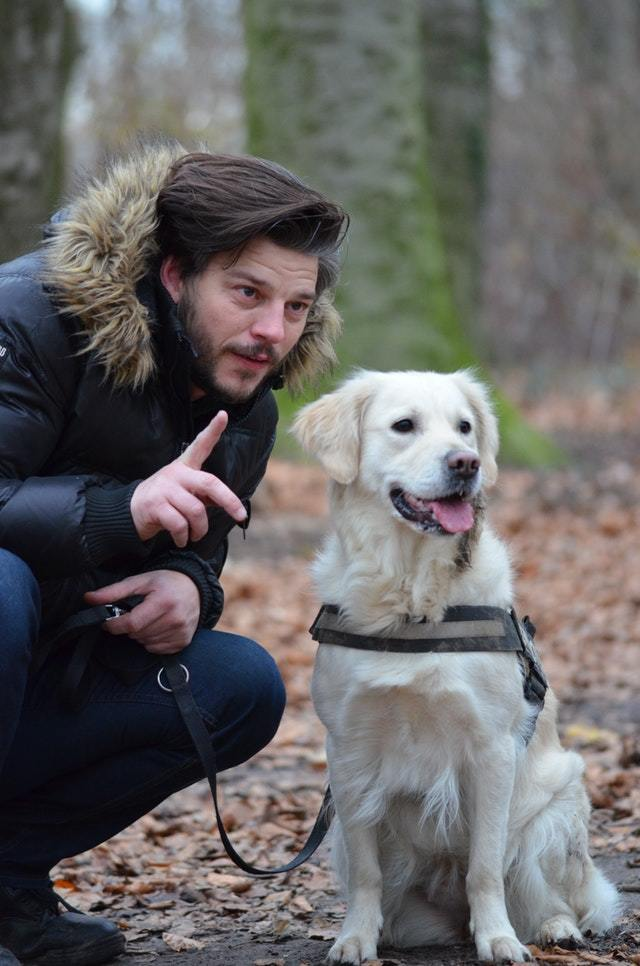 guard-dog-traning (1)