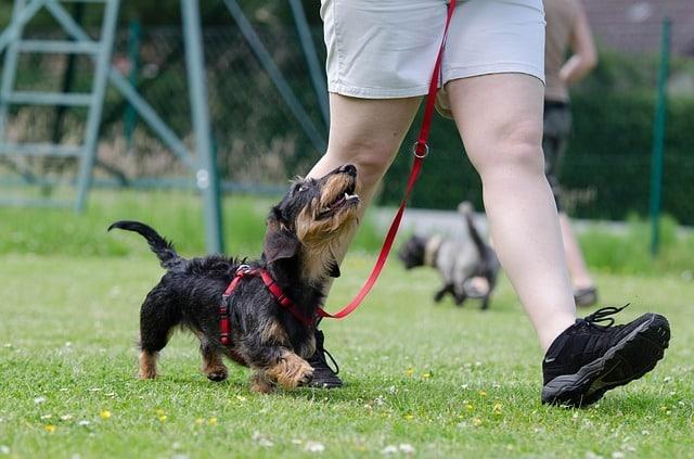 guard-dog-traning (2)