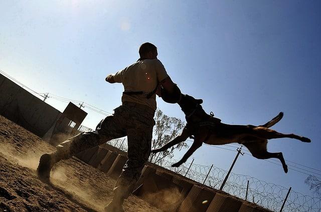 guard-dog-traning (3)