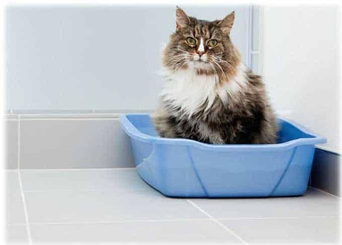 how-often-do-cats-poop-2