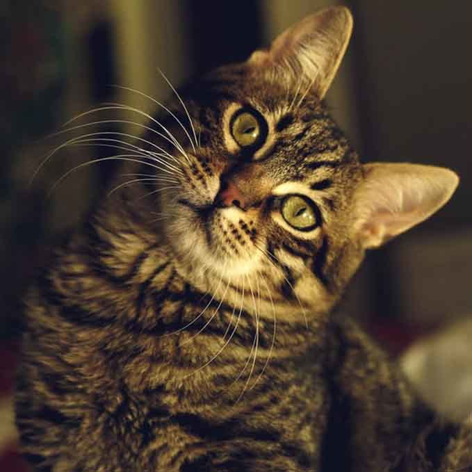 how-often-do-cats-poop-4