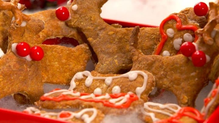 recipes-homemade-cosmos-dog-treat-2