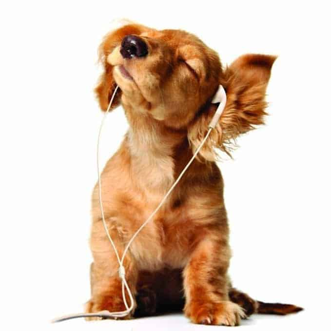 soothing-music-for-dogs-1