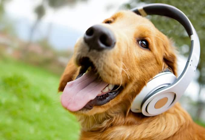 soothing-music-for-dogs-2