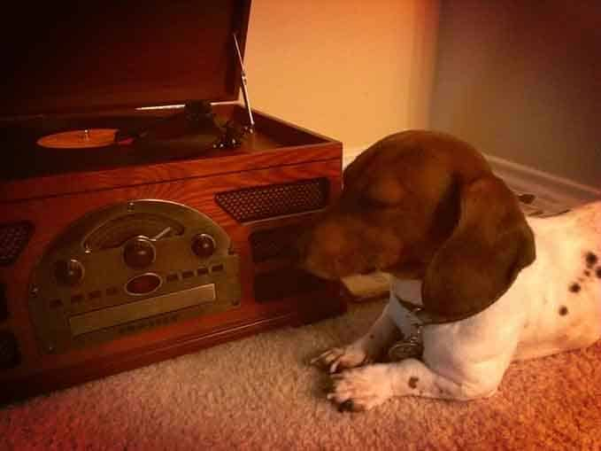 soothing-music-for-dogs-4