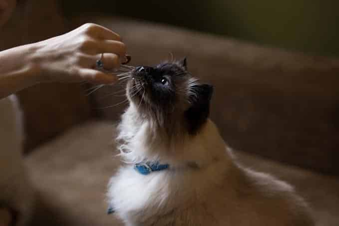 when-do-cats-reach-full-size-1