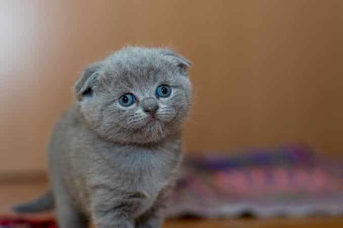 when-do-cats-reach-full-size-2