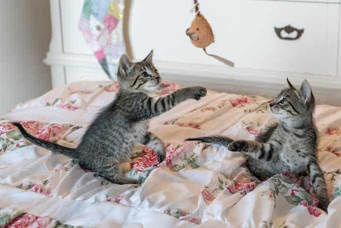 when-do-cats-reach-full-size-5
